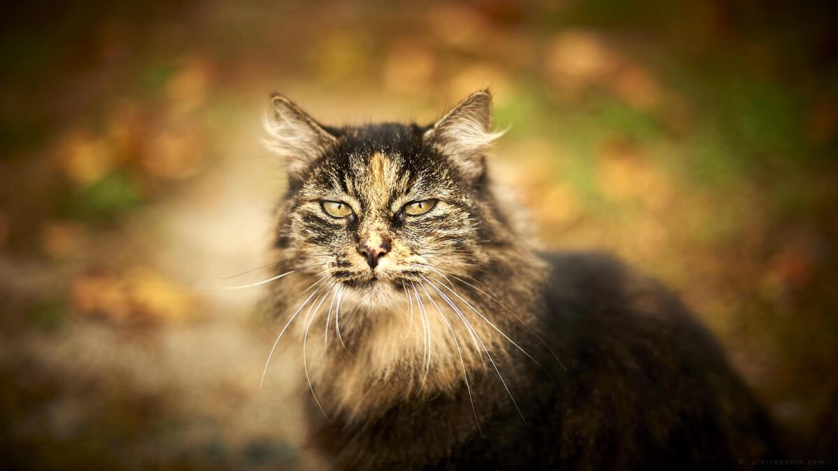 Une chatte appelée 'Chatouille' !